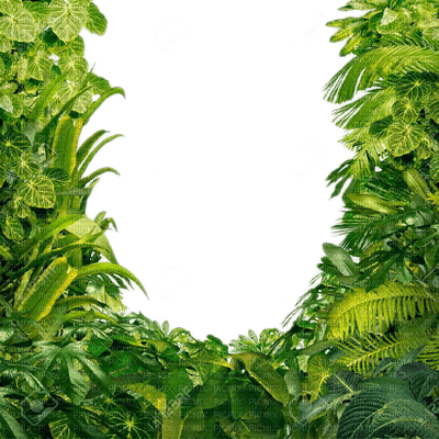Jungle leaves frame frame green picmix - Marcos para plantas ...