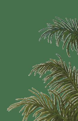 Tube plante verte picmix for Plantes vertes