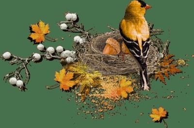 autumn birds, autumn birds - PicMix