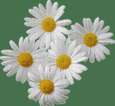 chantalmi fleur marguerite blanche
