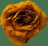 minou-orange-flower-rose-ros