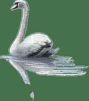swan, gif, bird