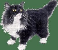 Cat.chat.Victoriabea