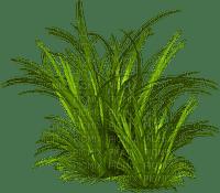 tube herbe