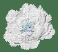 minou-white-flower-rose