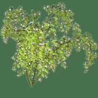 Plant.Tree.Victoriabea