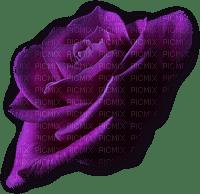 minou-purple-rose-flower-lila-ros-blomma