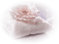 Cushion with rose
