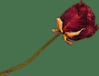 minou-red-rose-flower