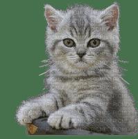 cat  chat katze