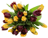 Kaz_Creations Flowers Deco Flower Colours