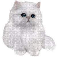 patricia87 chat