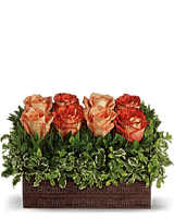 Kaz_Creations  Flowers Vase Plant