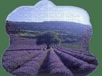 paysage-landscape-lavande-field lavender Blue DREAM70