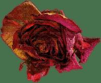 minou-red-rose-ros