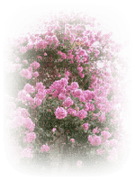 paysage fleur bougainvillier rose