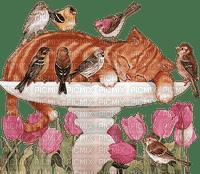 loly33 chat oiseaux fleurs