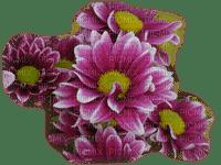 minou-flower-blomma-fiori-fleur