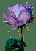 rose,flower,fleur
