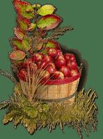 autumn_automne_fruits_pommes_apples_BlueDREAM 70