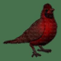Kaz_Creations  Birds Bird