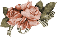 minou-papricot-apricos-flower-blomma-fiori-fleur