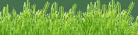Kaz_Creations Deco Grass