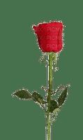 minou red rose
