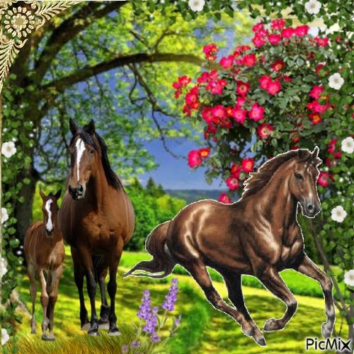 Les chevaux dans la prairie