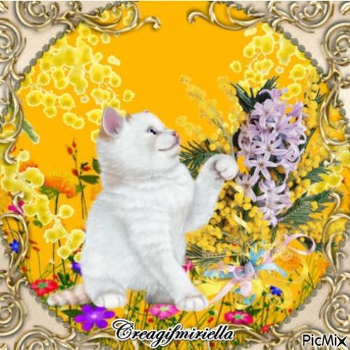 Chat  blanc  dans les  mimosas et  fleurs