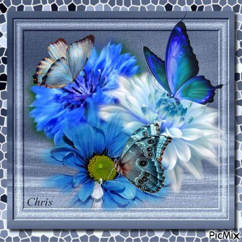 Les papillons bleu