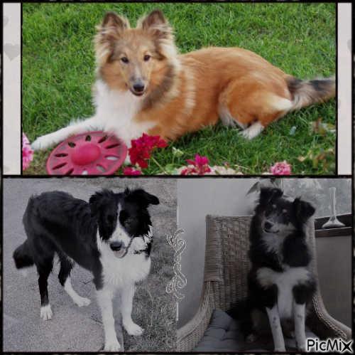 mes chiens: chacune à 6 mois.