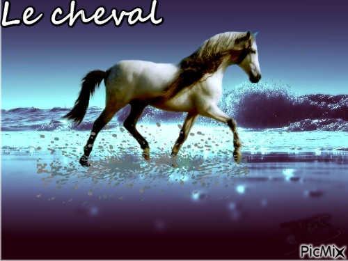 Le cheval, c'est trop génial !