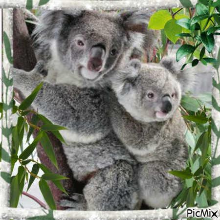 animaux d australie