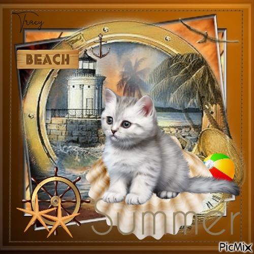 Summer cat on the beach