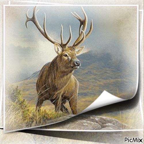 Hirsch in der Natur