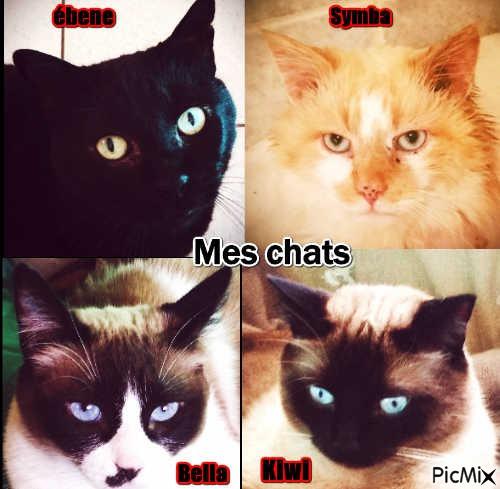 mes chats