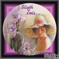 Fleurs d'Iris.