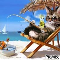 Chat d'été sur la plage