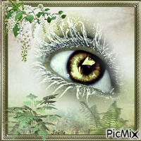 L'oeil au regard vert !