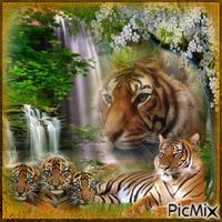 tigres et cascades