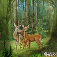 Im Wald mit Rehe