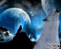 Hurlement de loup
