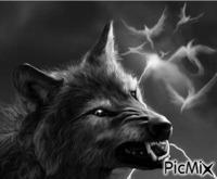 """""""Le loup de la colère"""""""