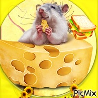 Une petite souris trop gourmande