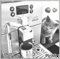 Café du chat