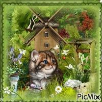 my l cat in the garden