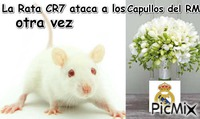 rata cr7