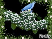 Birdes