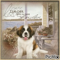 Ten-der, Love & Care